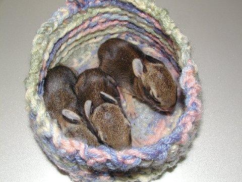 Wildlife Rescue Nests
