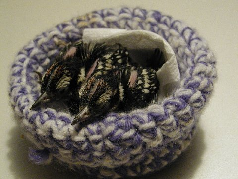 Nests For Wildlife Rescues